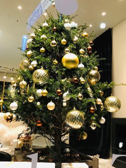 外苑前のクリスマスツリー