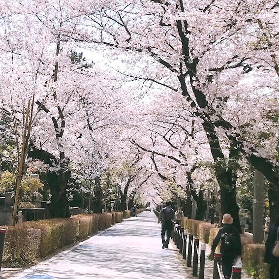平成最後のお花見 青山霊園 外苑前店近く01